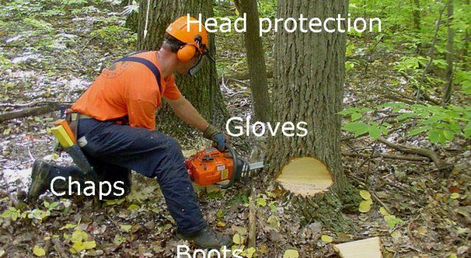Sertifikasi Operator Chainsaw